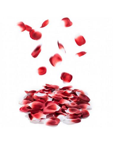 Petal Passion - Pétales de roses